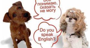 Как повысить уровень английского языка
