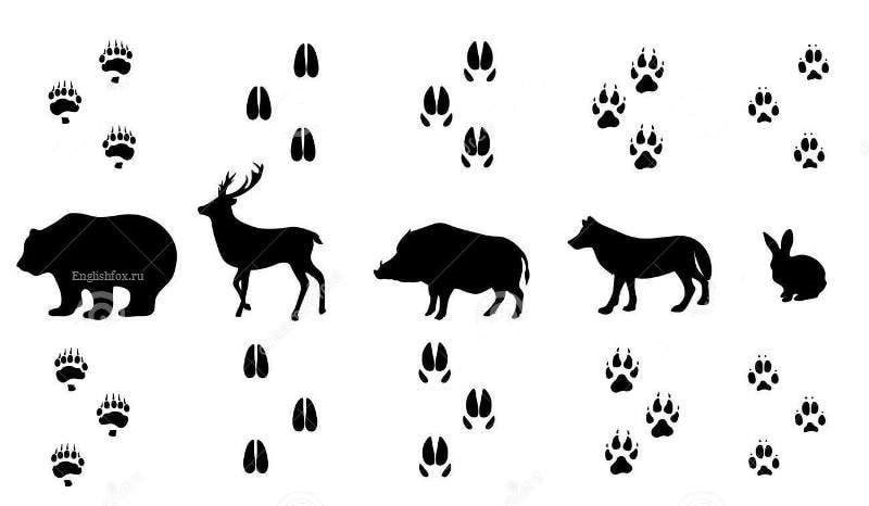 Animals' Tracks