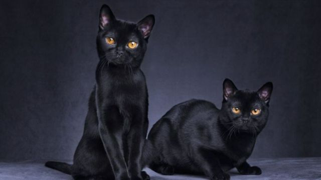The Two Witch Cats