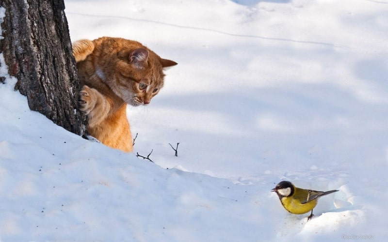 Короткие стихио зиме с переводом